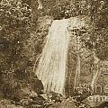 La Coca Falls El Yunque National Rainforest Puerto Rico Print Vintage Print by Shawn O'Brien