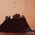 La Push Silhouette With Birds Print by Kym Backland
