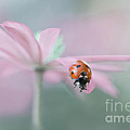Lady in Pink Print by Jacky Parker