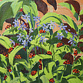 Ladybirds by Andrew Macara