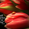Ladybug and Tulip Poster by Linda Fowler