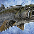 Lake Trout Poster by Nick Laferriere
