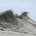 Large Dunes Print by Cathy Lindsey