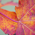 Leaf Abstract in Pink Print by Irina Wardas