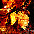 Leaf and Light Abstract Print by Natalie Kinnear