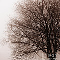 Leafless tree in fog Print by Elena Elisseeva