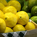 Lemons and Limes Print by Julie Palencia