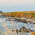 Lighthouse in Summer Poster by Artist and Photographer Laura Wrede