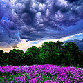 Lilacs Poster by Phil Koch