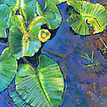 Lily Pads by Nick Payne