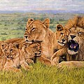 Lion Family Print by David Stribbling