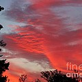 Lobster Sky Print by Barbara Griffin