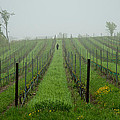 Lone Figure in Vineyard in the Rain on the Mission Peninsula Michigan Print by Mary Lee Dereske