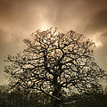 Lone Tree Print by Christopher and Amanda Elwell