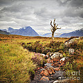 Lone Tree Rannoch Moor Scotland Print by Colin and Linda McKie