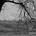 Longs Peak and Mt. Meeker the Twin Peaks Black and White Photo I Print by James BO  Insogna