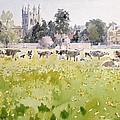 Looking Across Christ Church Meadows Poster by Lucy Willis