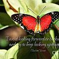 Looking Upward Poster by Diane E Berry