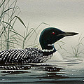 Loon Near the Shore Print by James Williamson