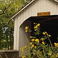 Loux Bridge and Tickseed in September by Anna Lisa Yoder