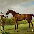 Lustre held by a Groom Poster by George Stubbs