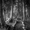 Magical Forest 2 Print by Scott Norris