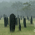 Magnetic Termite Mounds Print by Bob Christopher