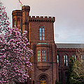 Magnolias Near The Castle Print by Andrew Pacheco