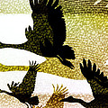 Magpie Geese in Flight Print by Holly Kempe