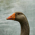 Male Graylag Goose Profile Print by Denyse Duhaime