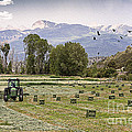 Mancos Colorado Landscape by Janice Rae Pariza