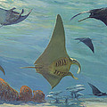 Manta Ray Print by ACE Coinage painting by Michael Rothman