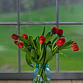 Mason Jar with Tulips Poster by Kay Pickens