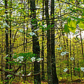 Meriwether Lewis Campground at Mile 386 of  Natchez Trace Parkway-TN Print by Ruth Hager