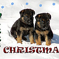 Merry Christmas Puppies Print by Aimee L Maher