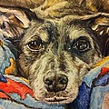 Milo the Lurcher Poster by Pet Portraits by Julie Bunt
