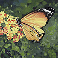 Monarch Butterfly Print by Natasha Denger