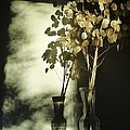 Money Plants Really Do Cast Shadows Print by Guy Ricketts
