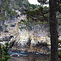 Monterey Rock Pines and Cypress Print by Viktor Savchenko