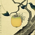 Moon Persimmon and Grasshopper Print by Katsushika Hokusai