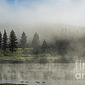 Morning Fog on the Yellowstone Poster by Sandra Bronstein