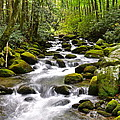 Mossy Mountain Stream Poster by Frozen in Time Fine Art Photography