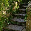 Mossy Steps Print by Carla Parris