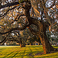 Mossy Trees at Sunset Print by Debra and Dave Vanderlaan