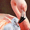 Mother and baby flamingo Poster by Jane Schnetlage