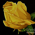 Mother's Yellow Rose Print by Cory Still