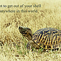 Motivating A Turtle Print by Robert Frederick