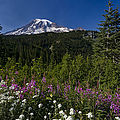 Mt. Rainier Print by Adam Romanowicz