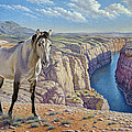 Mustang at Bighorn Canyon Print by Paul Krapf