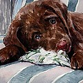 My Rope Toy Print by Molly Poole